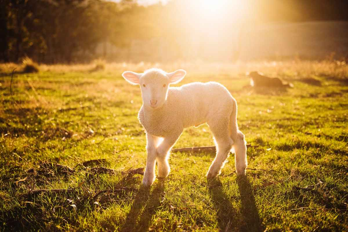 Is wool production a profitablebusiness?
